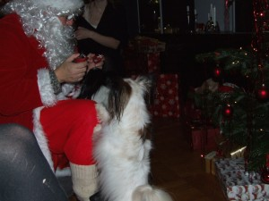 Of course the dogs wanted to be in the act as well.